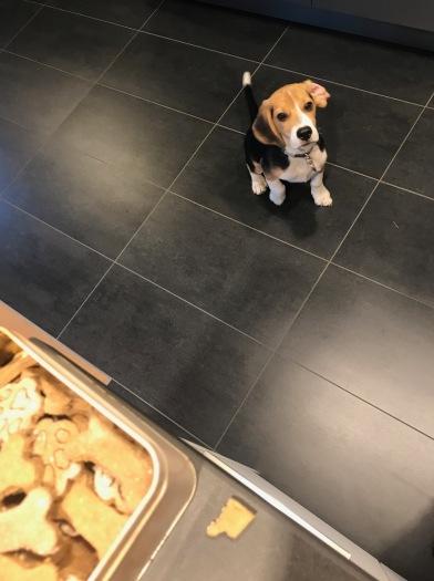 Frauchen hat Hundekekse gebacken!